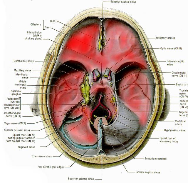 Oxford Neurosurgeon Endoscope Assisted Skull Base Surgery